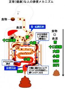 出典:http://悩み解決人.jp/wp-content/uploads/2014/07/0geri03.jpg