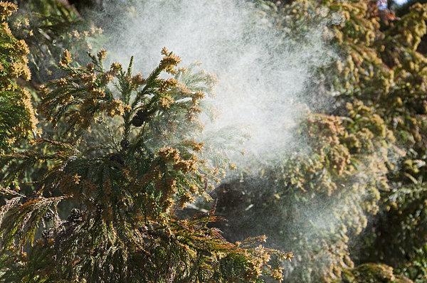 今から始めよう!!花粉症を予防する生活習慣
