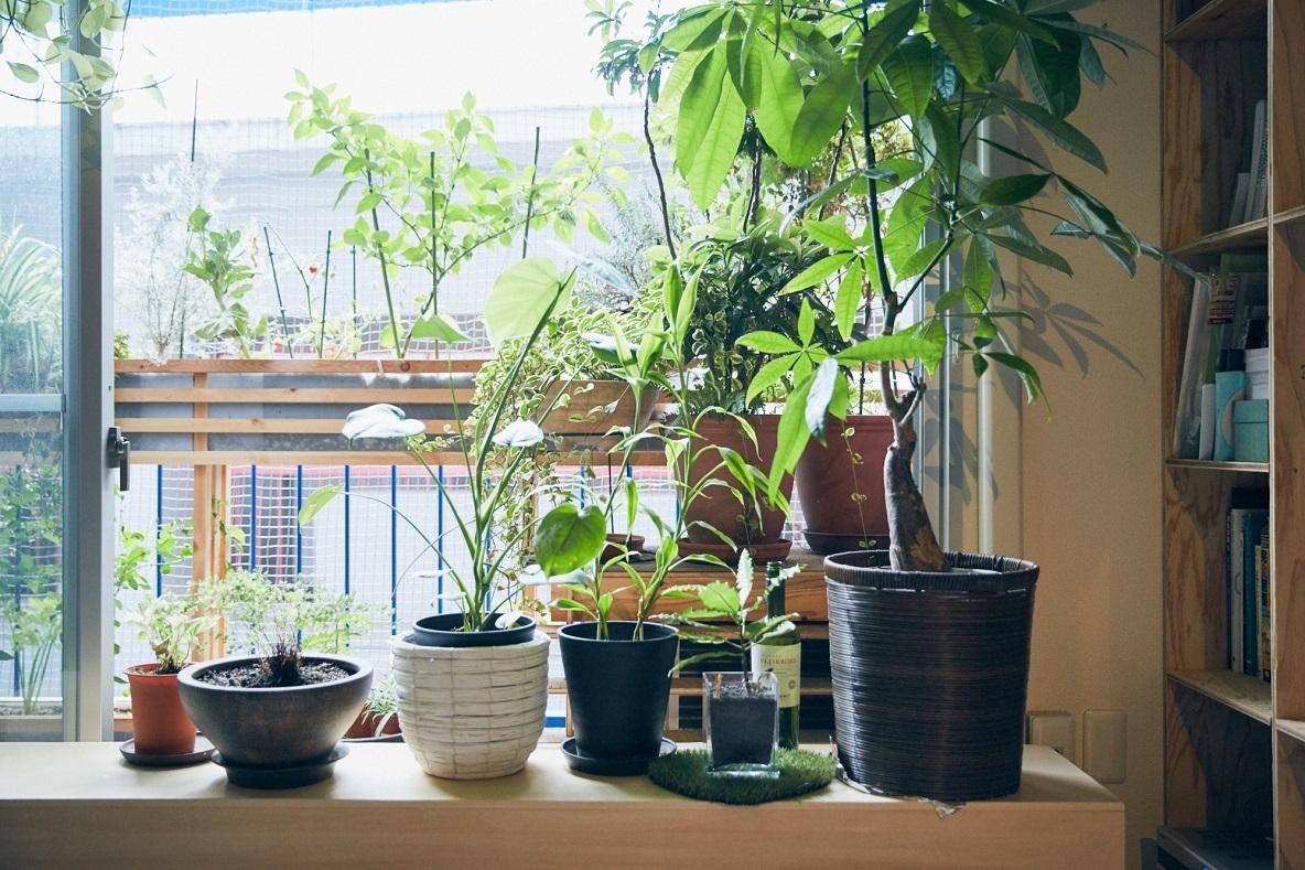 観葉植物 乾燥対策