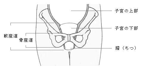骨盤の骨産道